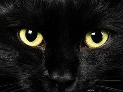 Blackcat !